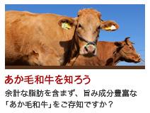 あか毛和牛を知ろう